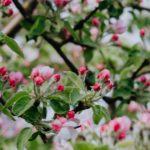 花粉症と体調