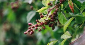 花粉症と東洋医学